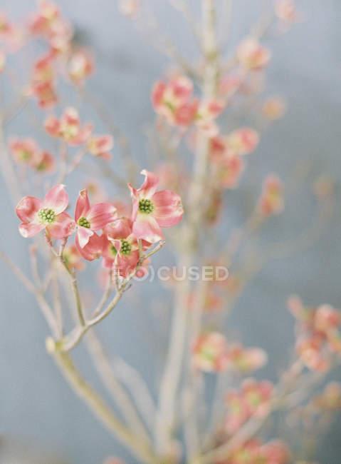 Элегантный полевые цветы — стоковое фото