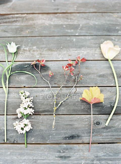 Campo de flores sobre mesa de madera - foto de stock