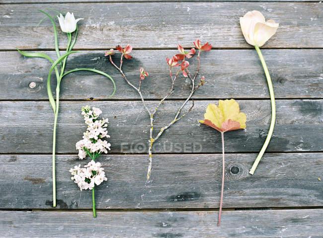 Surtido de flores frescas cortadas - foto de stock