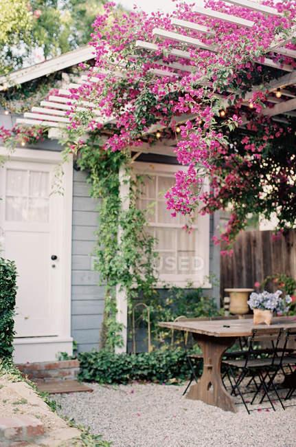 Cortile con fiori rosa — Foto stock