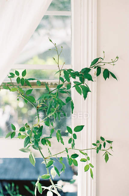 Potted plant on windowsill — Stock Photo