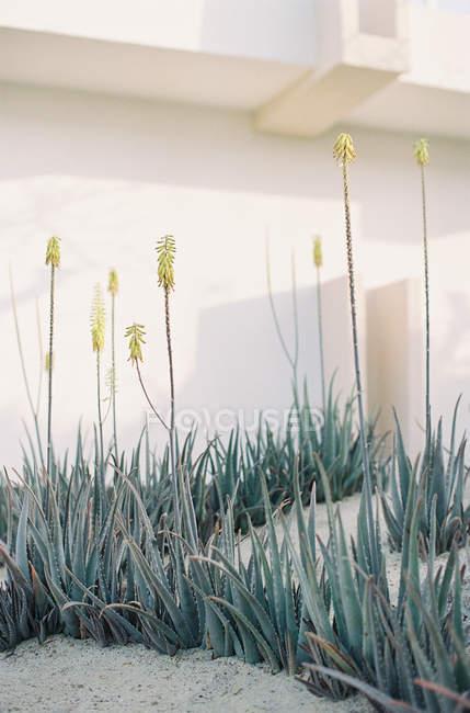 Plantas que crecen cerca de casa - foto de stock