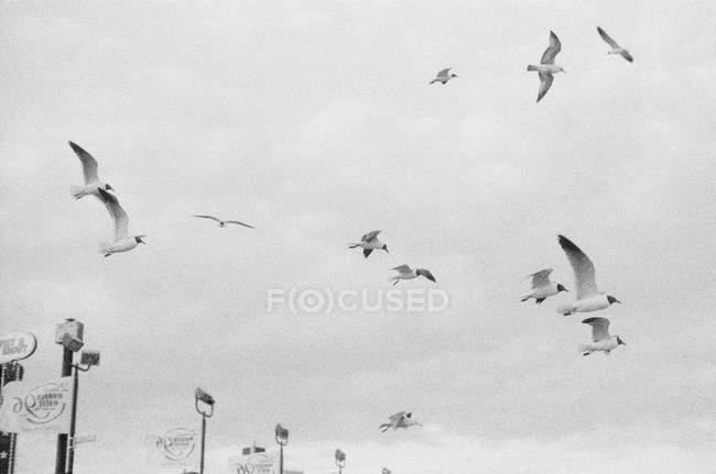 Gaivotas em voo sobre lanternas — Fotografia de Stock