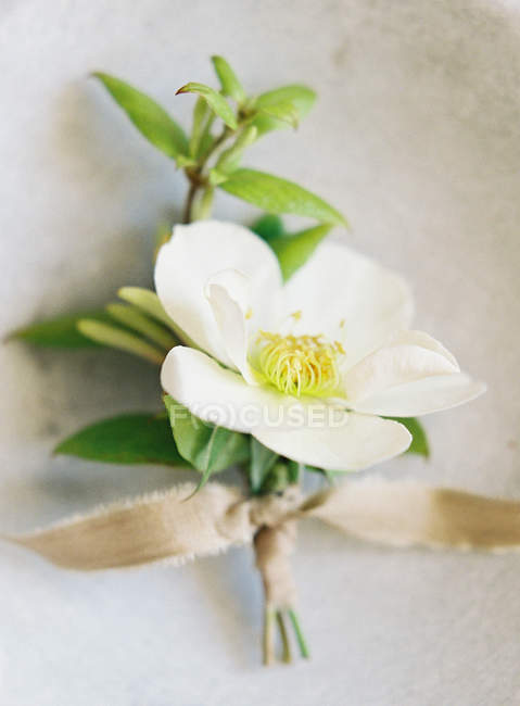 Wedding boutonniere with ribbon stock photo 156652628 wedding boutonniere with ribbon stock photo junglespirit Images