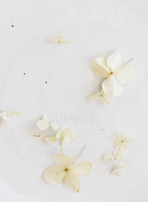 Flores decorativas elegantes - foto de stock