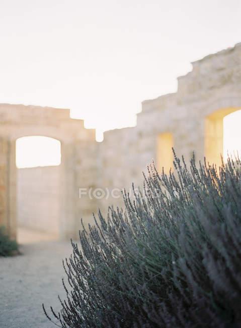 Planta sobre cerca de pedra — Fotografia de Stock