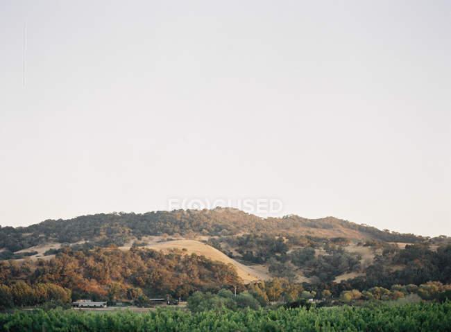 Colinas com pomar de vinho em primeiro plano — Fotografia de Stock