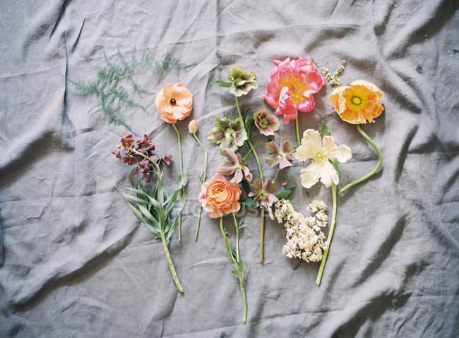 Cortadas frescas flores coloridas — Fotografia de Stock