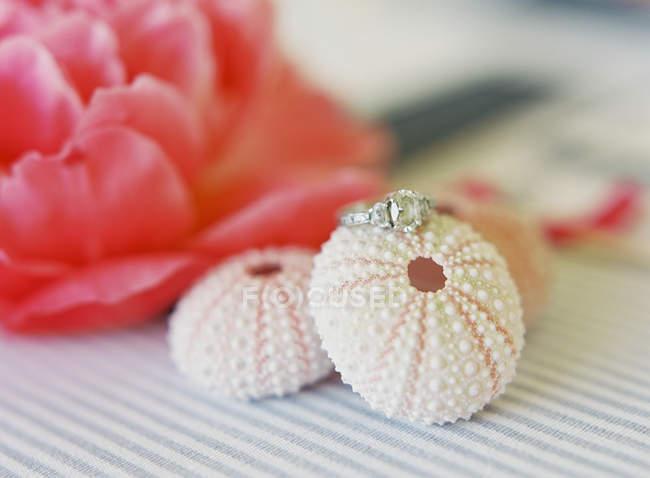 Elegante anello nuziale sul guscio di riccio di mare — Foto stock