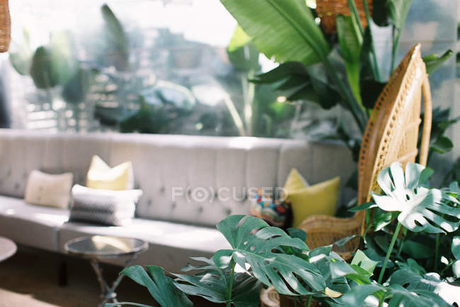 Fresh potted flowers — Stock Photo