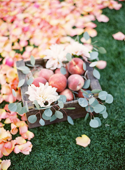 Fresh peaches in crate with petals — Stock Photo