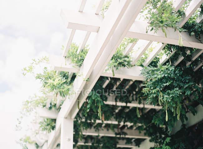 Plantas decorativas en marcos de madera - foto de stock