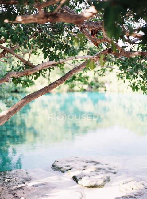 Віддалений озеро з пишною рослинністю — стокове фото