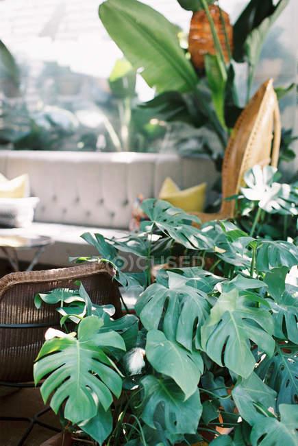Свіжі квіти кімнатні — стокове фото