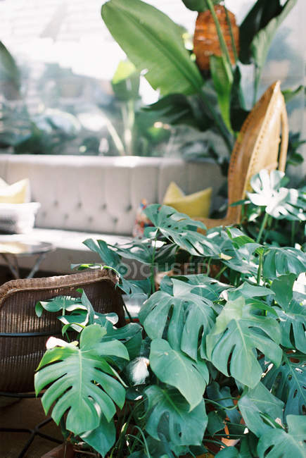 Fiori freschi in vaso — Foto stock