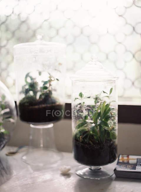 Plantes en bouteilles de verre sur le rebord de la fenêtre — Photo de stock
