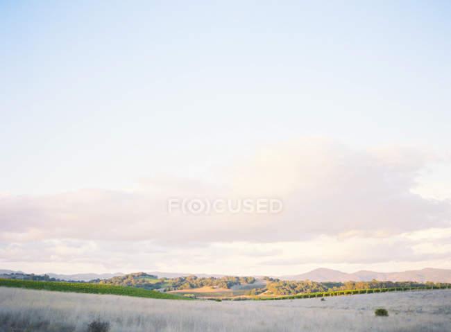 Vue du champ pittoresque — Photo de stock
