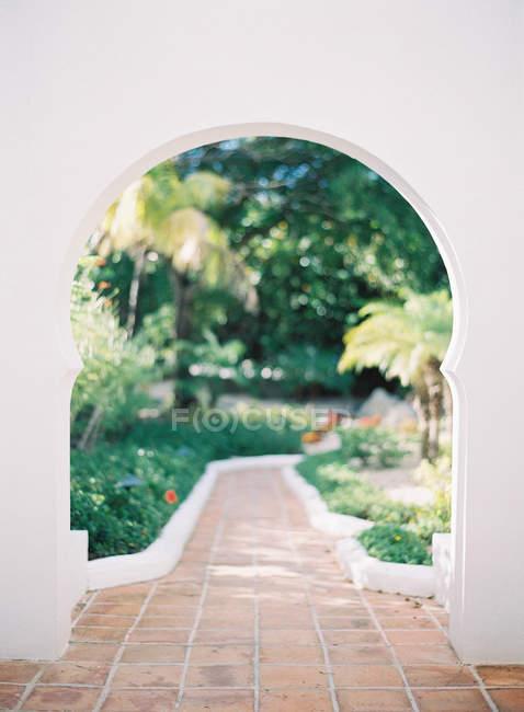 Пишного саду з пальмами — стокове фото
