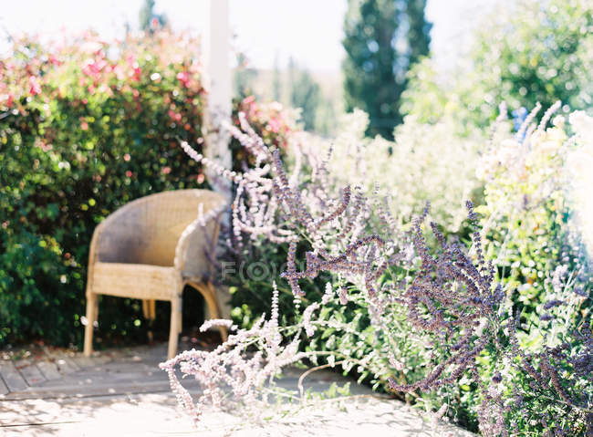 Garden with flowers and lush vegetation — Stock Photo
