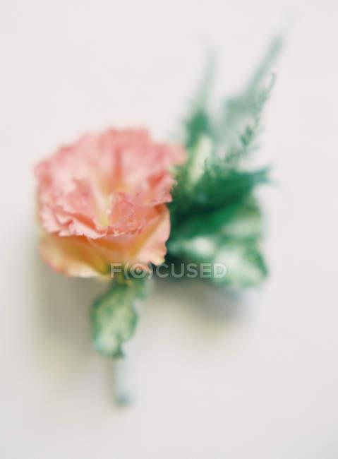 Flor rosa com folhas — Fotografia de Stock