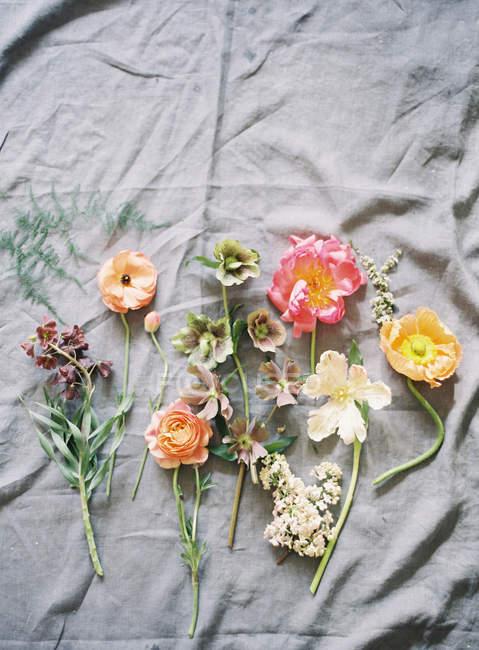 Coupées fraîches fleurs colorées — Photo de stock