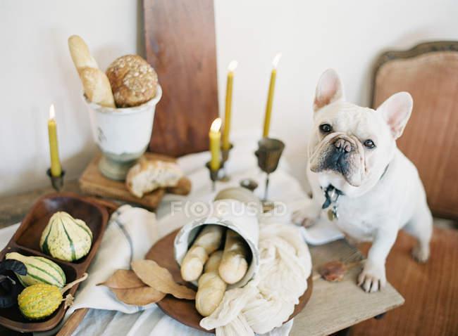 Mesa con bulldog francés sentado en - foto de stock