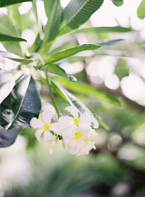 Flowers growing on plants — Stock Photo
