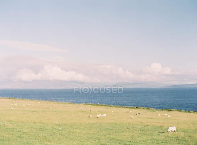 Felsen in Küstenlinie — Stockfoto