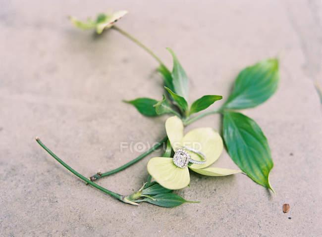 Обручальное кольцо на свежем цветке — стоковое фото