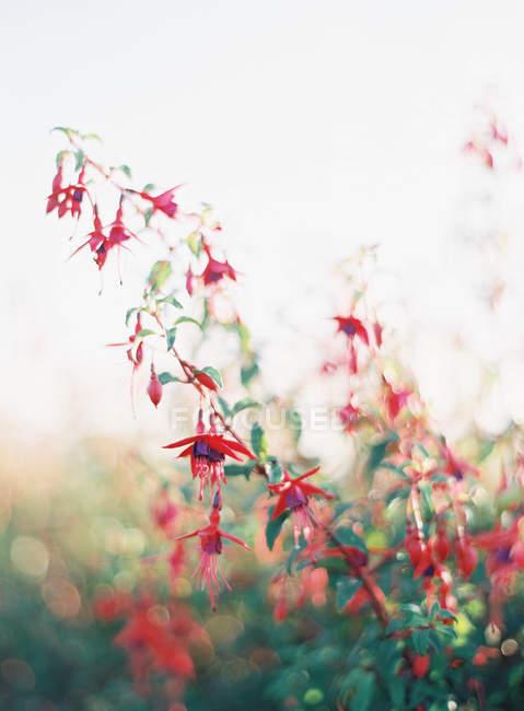 Rustic summer flowers — Stock Photo