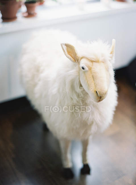 Sheep soft toy on floor — Stock Photo