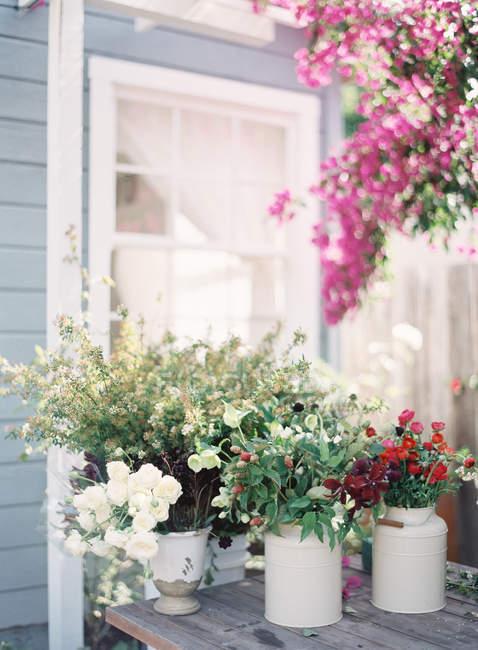 Квіти ростуть в горщиках — стокове фото