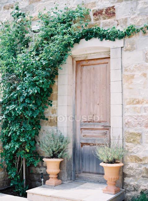 Old wooden door with ivy vines — Stock Photo