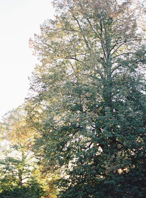 Дерево росте у сільській місцевості — стокове фото