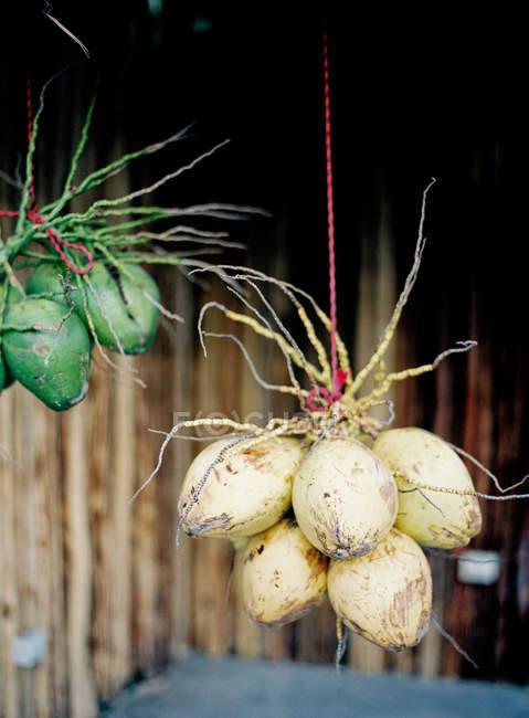 Cocos colgando de las cuerdas al aire libre - foto de stock