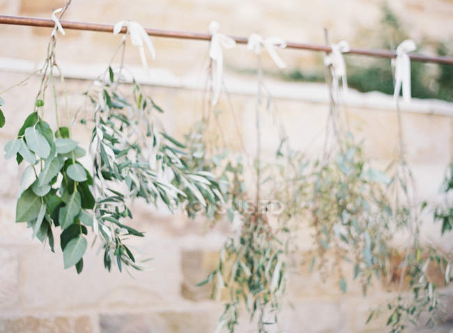 Tree branches hanging — Stock Photo