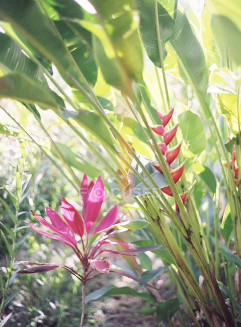 Цветы растут на растениях — стоковое фото