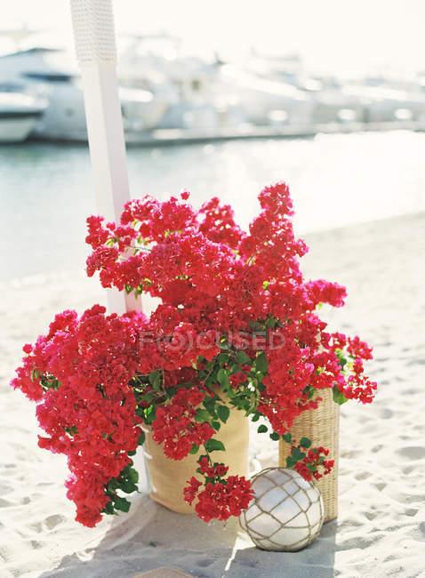 Fleurs roses en pot — Photo de stock