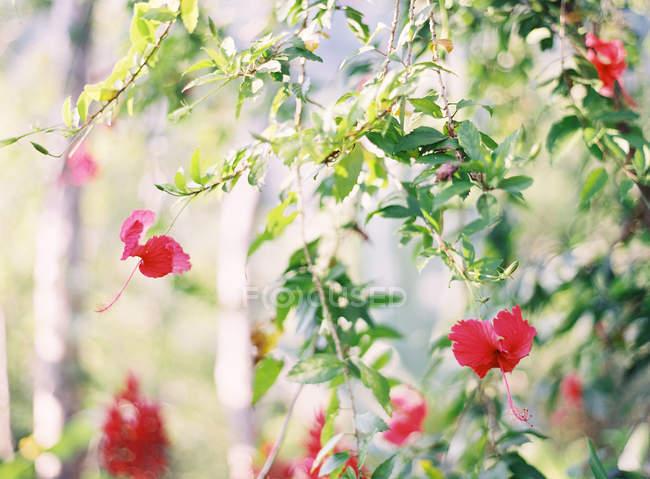 Цветы, растущие на растения — стоковое фото