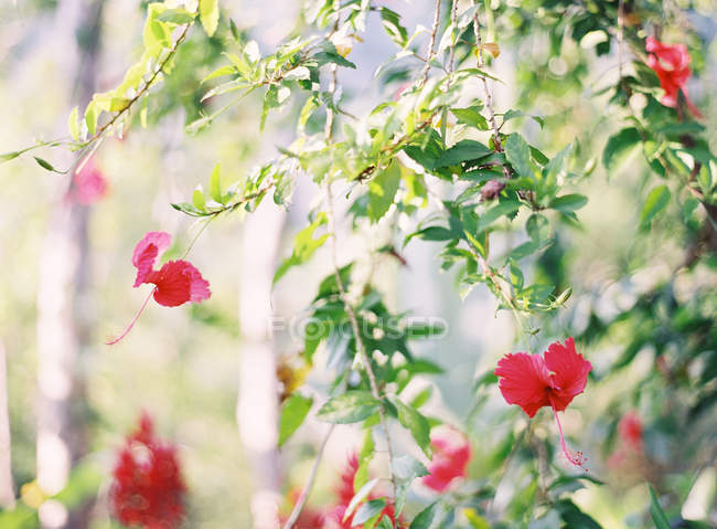 Flowers growing on plants — Stock Photo