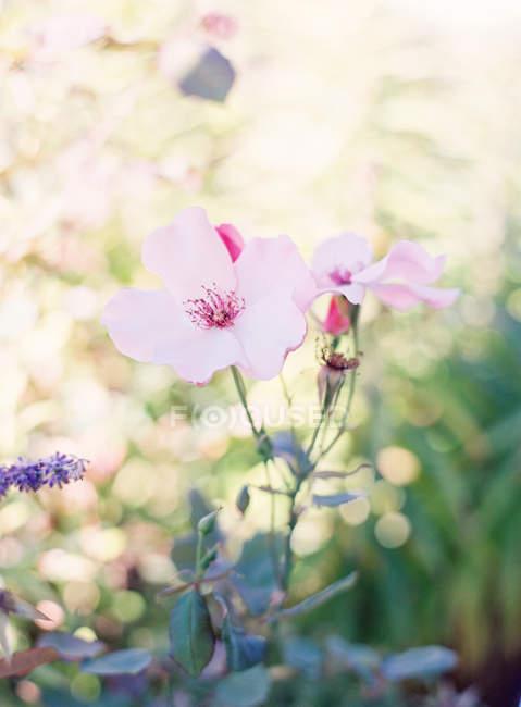 Деревенские летние цветы — стоковое фото