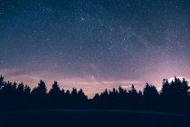 Ліс силует проти ясно зоряного неба — стокове фото