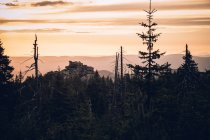 Floresta de pinheiros e picos rochosos — Fotografia de Stock