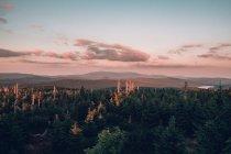 Сосновые леса покрытие горный ландшафт — стоковое фото