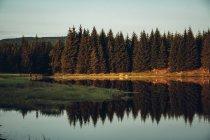 Kiefern spiegeln sich im ruhigen Fluss — Stockfoto