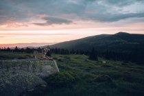 Einsamer Wolfshund an Klippe — Stockfoto