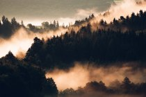 Fog covering pines on mountain slope — Stock Photo