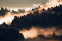 Brouillard couvrant les pins sur la pente de la montagne — Photo de stock