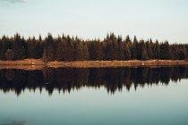 Kiefernwald spiegelt sich in ruhigem Fluss — Stockfoto