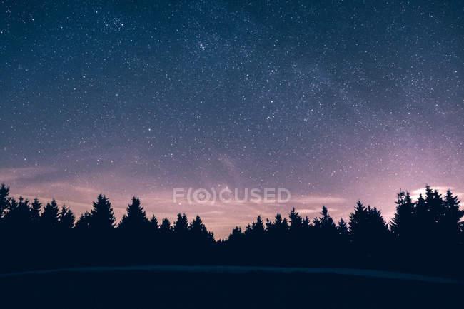 Silhouette de la forêt contre le ciel clair étoilé — Photo de stock